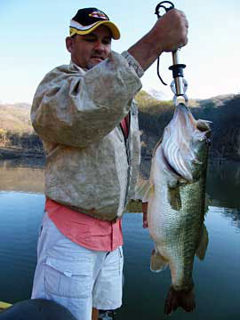 A hog 8 pound 8 ounce Lake Comedero bass landed by Ron Speed Jr of Exotic OutdoorAdventures