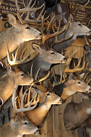 Big Buck Night is one of the top attractions at the 2017 Outdoorama.