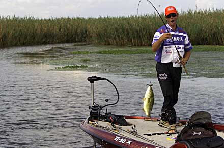 Mike Iaconelli lands a kicker largemouth bass during the 2003 Bassmaster Classic at the Louisiana Delta