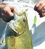 Mullett Lake smallmouth bass fall fishing northern Michigan War Eagle Spinnerbaits